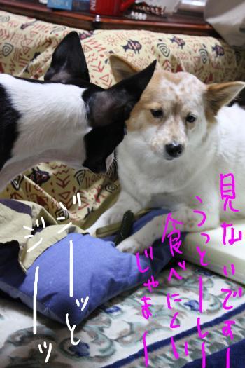 ponzu80+068_edited-1_convert_20091119090532.jpg