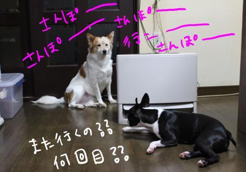 ponzu80+075_edited-1_convert_20091119090605.jpg
