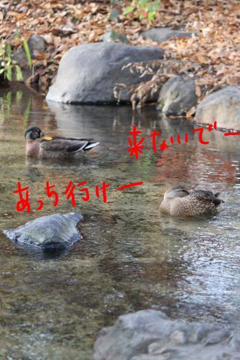 ponzu83+189_edited-1_convert_20091130092206.jpg