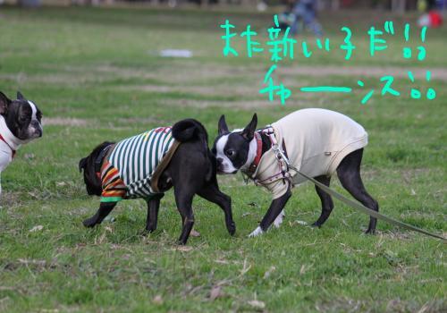 ponzu86+445_edited-1_convert_20091207183255.jpg