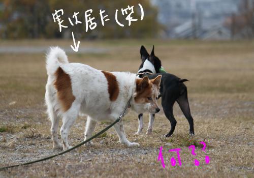 ponzu87+053_edited-1_convert_20091210182402.jpg