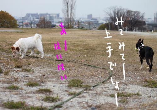 ponzu87+137_edited-1_convert_20091210182745.jpg