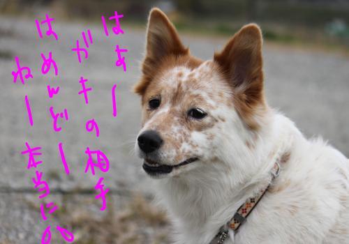 ponzu87+189_edited-1_convert_20091210183013.jpg