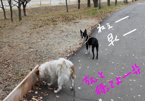 ponzu87+209_edited-1_convert_20091210183313.jpg