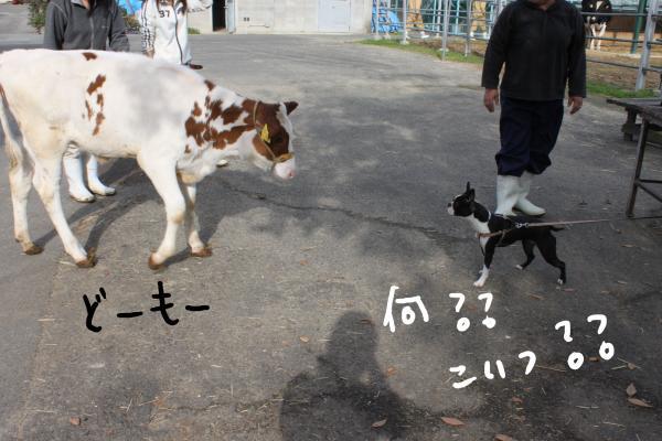 ponzu90+053_edited-1_convert_20091214111214.jpg