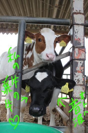 ponzu90+074_edited-1_convert_20091214111735.jpg
