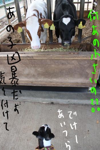 ponzu90+093_edited-1_convert_20091214111839.jpg