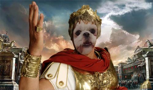 konbu cesar1