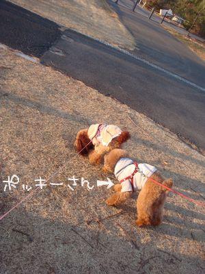 20110105pp.jpg
