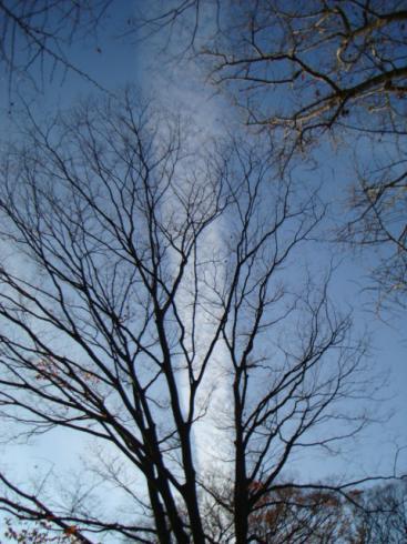 ひこうき雲と木