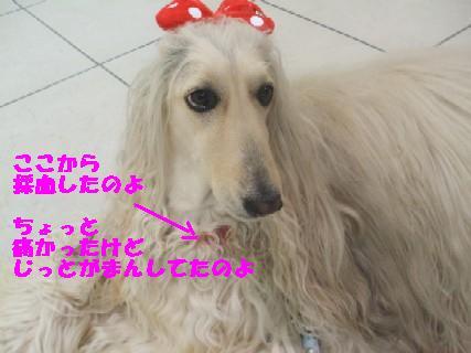 2009_10060012.jpg