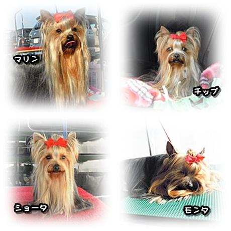 4dogs.jpg