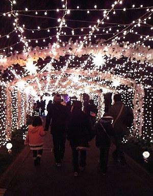 フローランテ宮崎 街並み見本園の光のトンネル