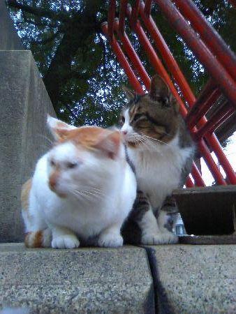鶴見大学の猫