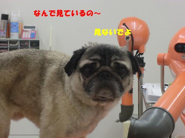 プリンシャンプー (3)