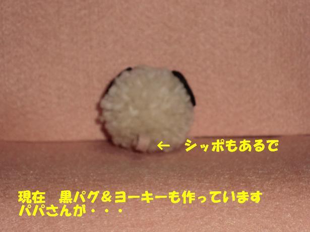CIMG1515.jpg