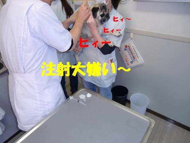 CIMG5322a.jpg