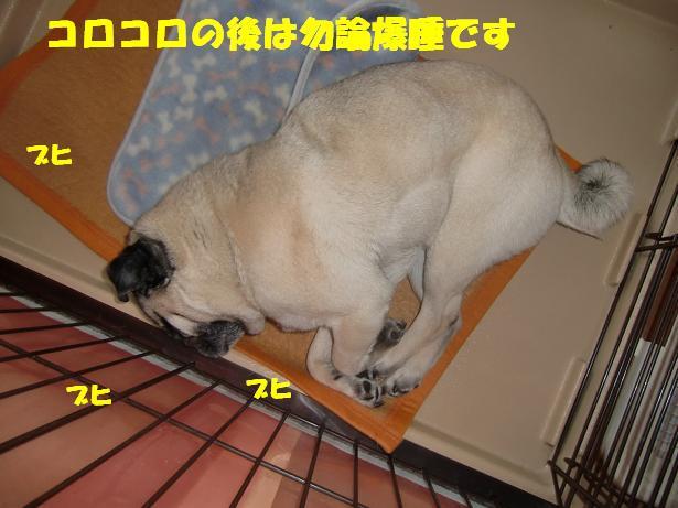 CIMG6005.jpg