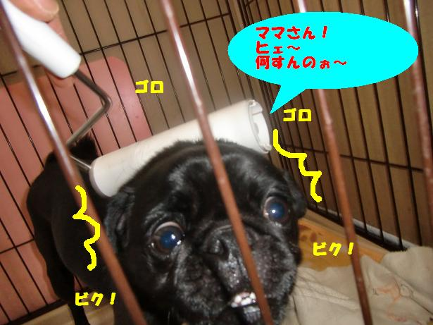 CIMG6024.jpg