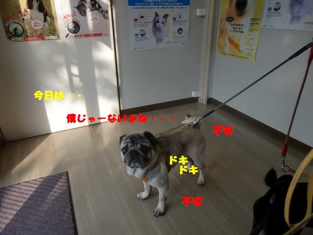 CIMG6376.jpg