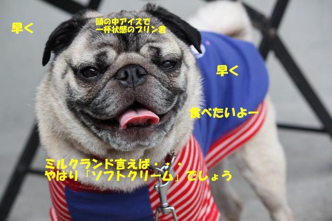 IMG_0772.jpg