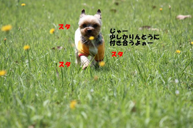 IMG_1086.jpg