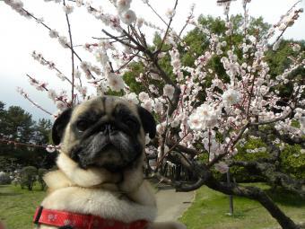 春のBBちゃん