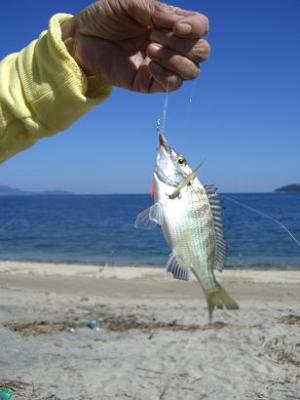 海釣  15