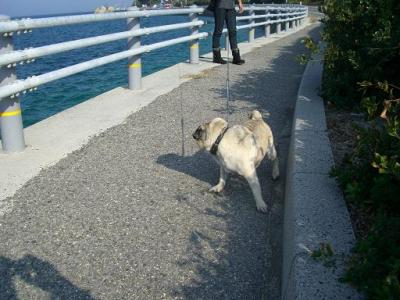 ぷー助 海散歩