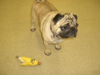ぷー助 バナナ