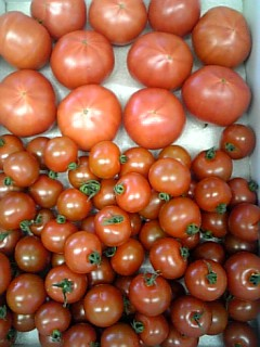 トマト 箱
