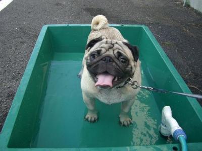 水遊び  6