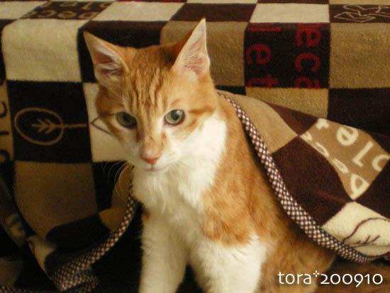 tora09-10-165.jpg