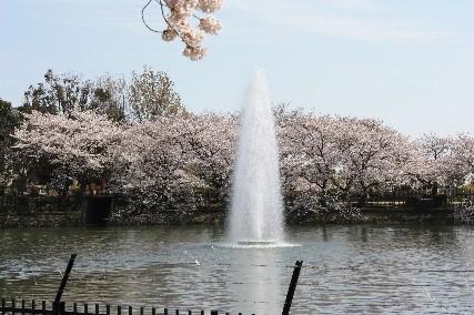 2010水月公園桜1