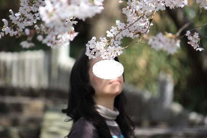 2010水月公園桜2