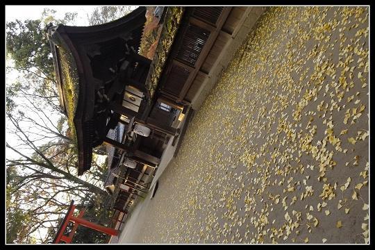 KAWA02(001)_20111213215621.jpg