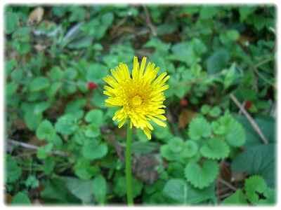 2010_0513_170807-CIMG2656.jpg