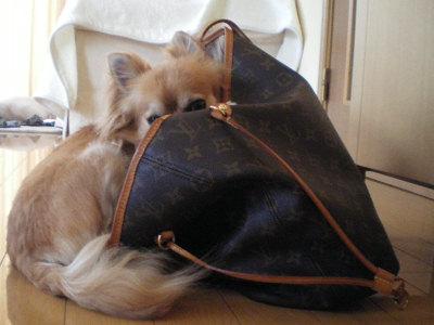 きょどうふしん犬1