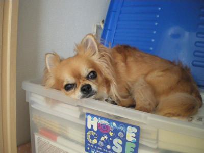 きょどうふしん犬4