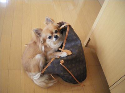 きょどうふしん犬2