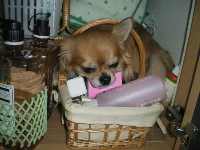 きょどうふしん犬6