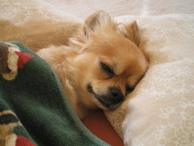 ゆっくり おやすみ