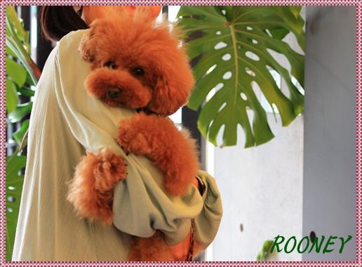 ROONEY_20091002152106.jpg