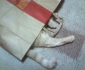 マクドの紙袋