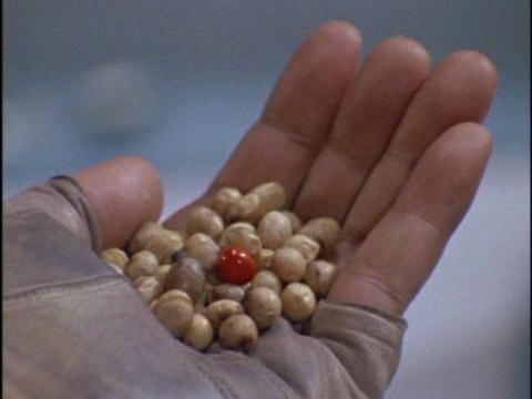 オニデビルの赤い豆
