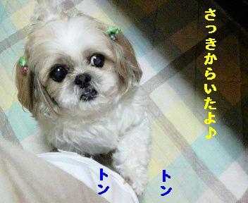 2009111400140001.jpg