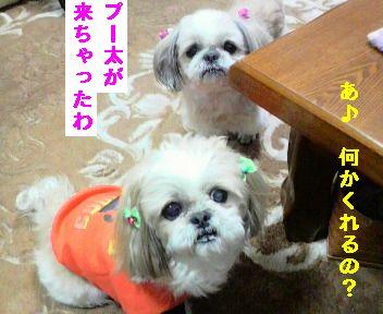 2009121314410001.jpg