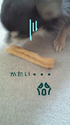 NEC_0882.jpg