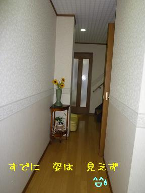 P1040916-1.jpg