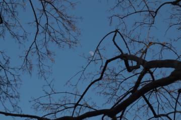 daytimemoon_20110213